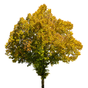 autumn-1763719_640