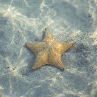 star-1236200_1280